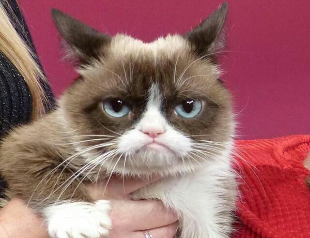 Mattinonline Padroni In Casa Nostra è Morta Grumpy Cat Uno Dei